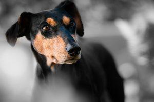 כלב משוטט