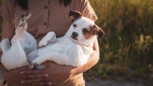 מחפשים מוצרים לכלבים שלכם הכירו את Unimal