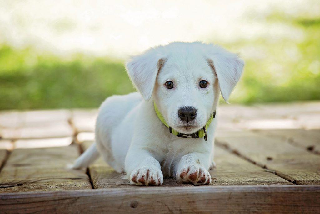 מחפשים מוצרים לכלבים שלכם - הכירו את unimal