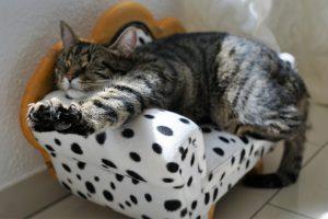 עשו זאת בעצמכם איך תוכלו להכין אביזרים לחתולים