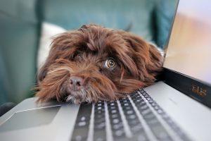 קשה לכם להיפרד מהכלב -אלו המשרדים שיאפשרו להביא אותו לעבודה