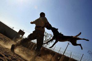 האם מאלפי כלבים זקוקים לביטוח?
