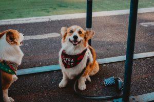 טיפול באמצעות בעלי חיים לילדים עם אוטיזם: איך כלבים יכולים לסייע?